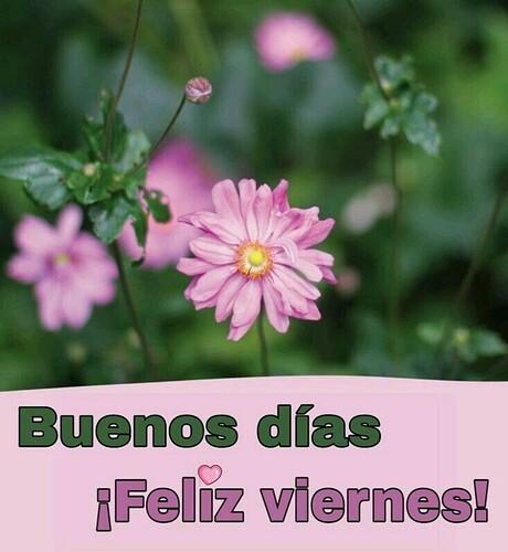 Buenos Días Feliz Viernes 9 - BonitasImagenes.net