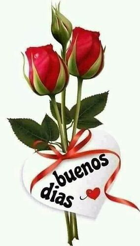 Rosas de buenos dias   Buenos dias con rosas, Saludos d buenos dias,  Mensaje d buenos dias